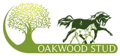 Oakwood Stud 3 Year Old Fillies – Heats